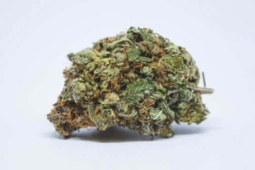 Dallas-Buyers_Purple-Urkle-4