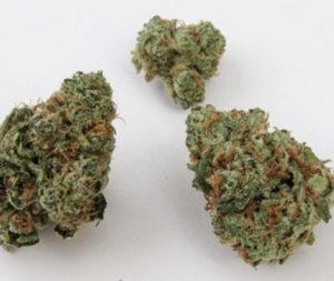 buy papaya cannabis strain