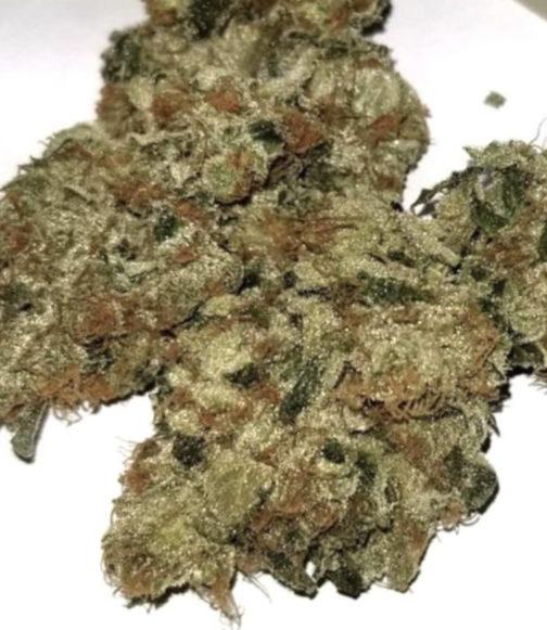 buy tropicana strain online